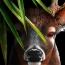 사슴의 모험과 가족에 대한 사랑이야기 Life of Deer 게임 출시