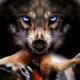 늑대 어드벤처 게임 Life of Wolf Reboot