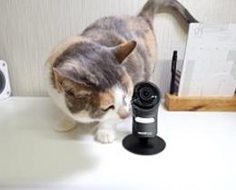 강아지CCTV,가정용CCTV 모두 훌륭한 초고화질화면 토스트캠, 고양이카메라로 활용기